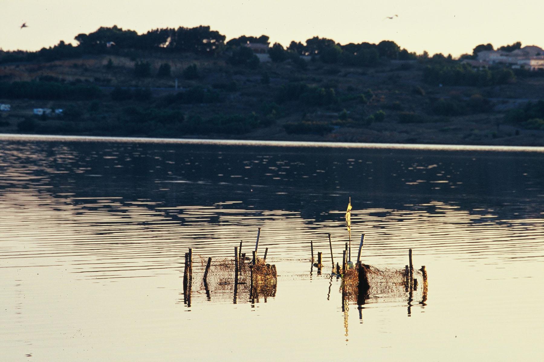 Fitou-03-13-2010-00615