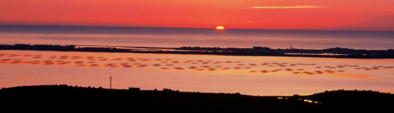 cropped-Fitou-03-13-2010-0065411.jpg